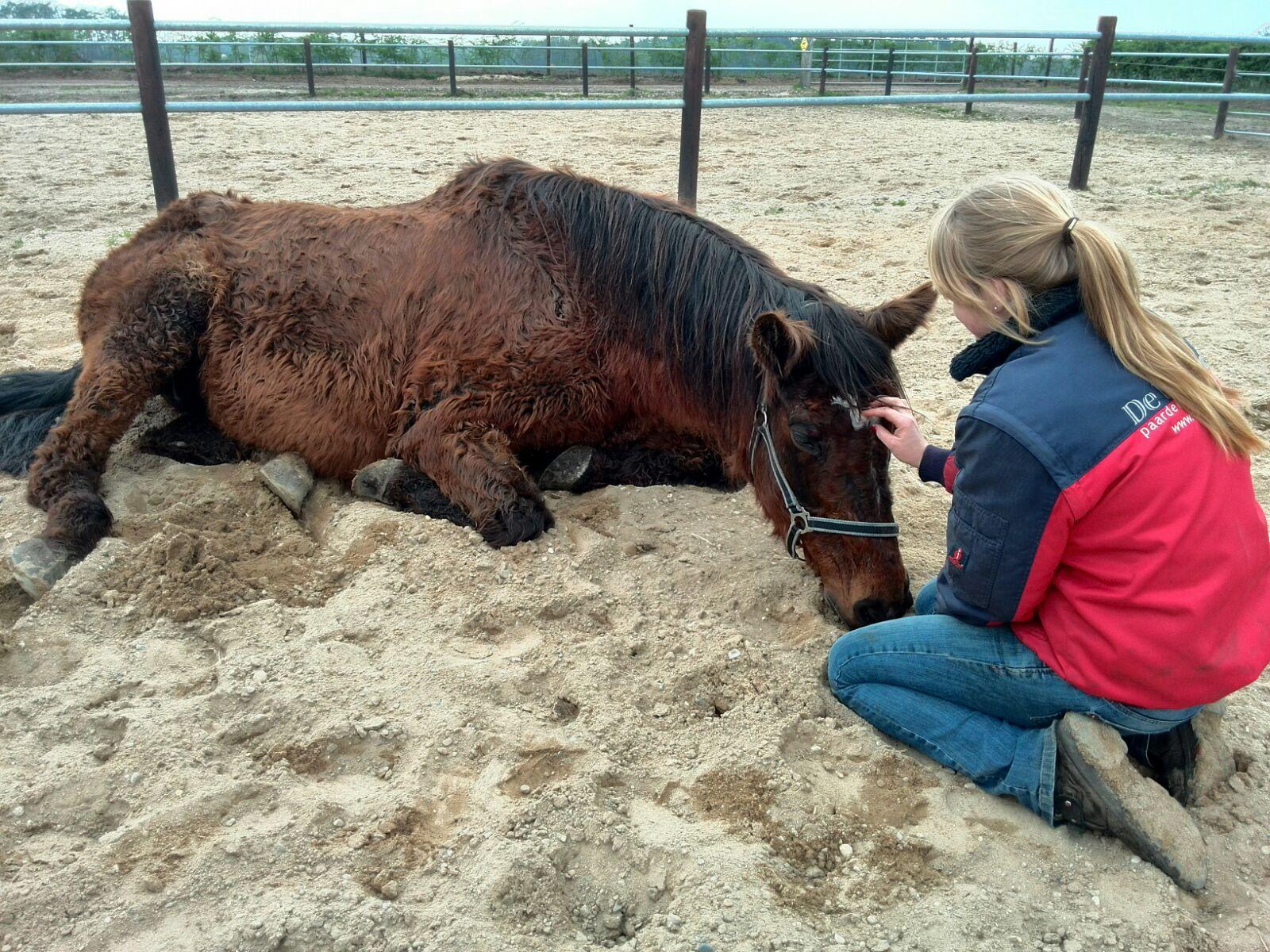 Het stervensproces van het paard